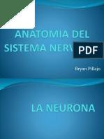 ANATOMIA DEL SISTEMA NERVIOSO.pptx