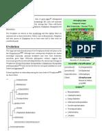 Ulvophyceae
