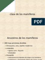 Class Mammalia.en.Es