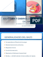 Anatomiayembriologiadelbazohernan 151005235613 Lva1 App6891