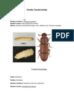 Familia Tenebrionidae