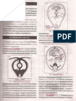 peritoneoprofe