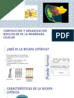 Composicion y Organización Molecular de La Membrana Celular