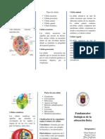 Folleto ramiro nuevo.pdf