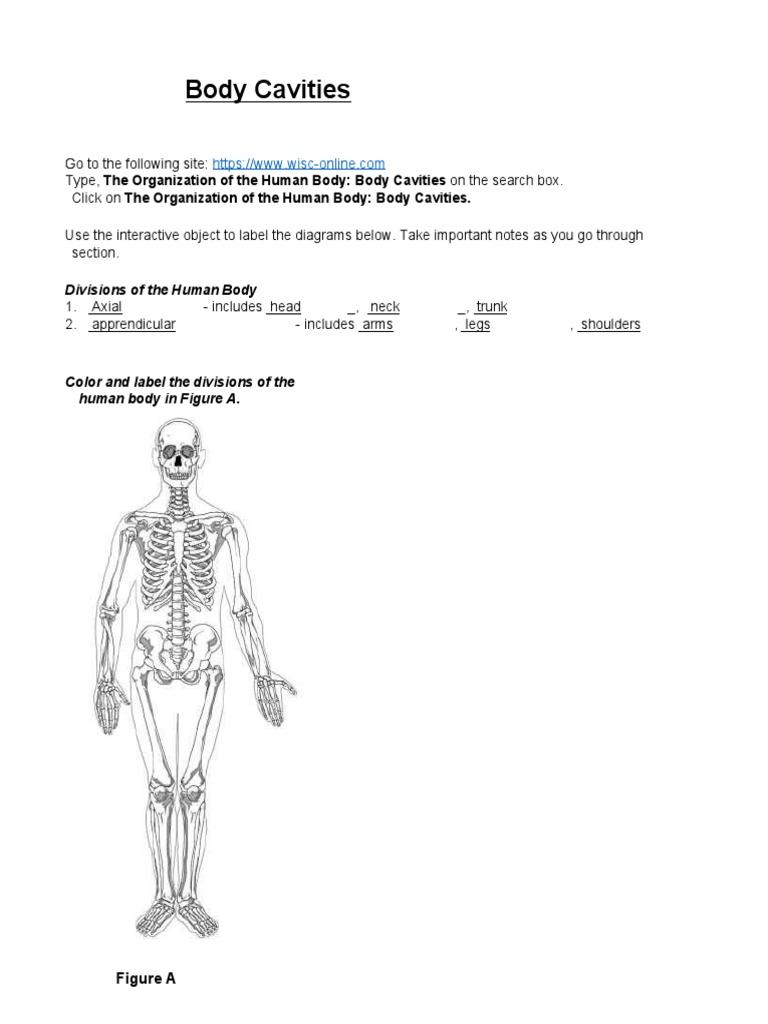 body cavities 2018 1 | Anatomy | Animal Anatomy