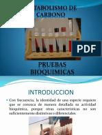 PRUEBAS_BIOQUIMICAS[1].pptx