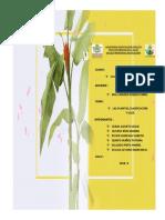 Plantas ,Clasificación y Usos