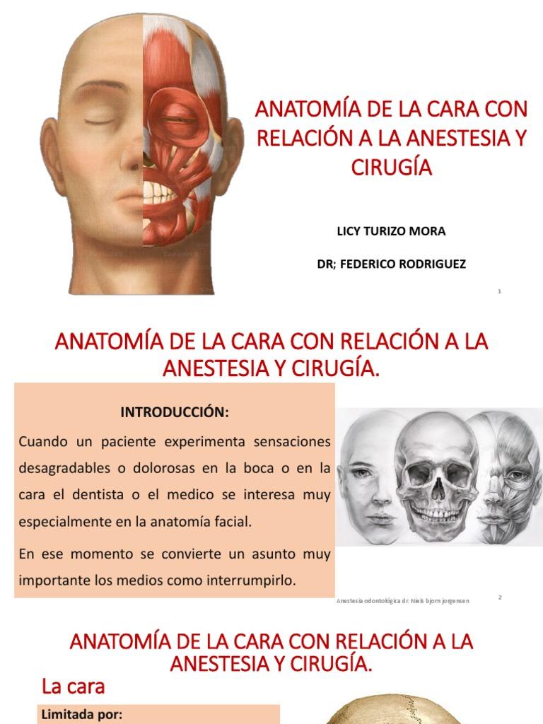 anataomia de la cara con relacion a la anestesia y cieugia.pptx