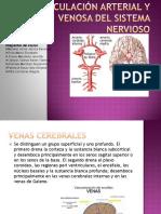 Equipo 3 Circulación arterial y venosa SN