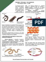 Annelida Nayara.docx