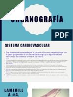 organografía-1