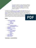Los-pulmones-humanos-son-estructuras-anatómicas-de-origen-embrionario-endodérmico.docx