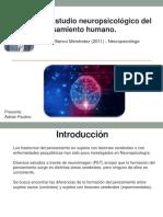 Estudio Neuropsicologico Del Pensamiento Humano
