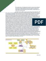 Retinitis Pigmentosa.docx