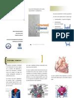 Desarrollo Venoso PDF
