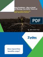 How Mycorrhiza Benefits Crops-Zydex Industries