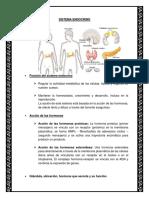 Sistema Endocrino.docx BIOLOGIA