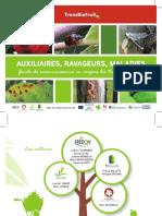 Guide de Reconnaissance en Vergers Bio Transfrontaliers_AUXILIAIRES, RAVAGEURS, MALADIE_(TransBioFruit)