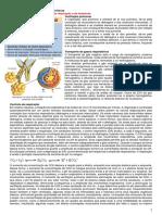 Tutoria 6 - Doenças Pulmonares