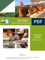 gallinas-140217174210-phpapp01.pdf