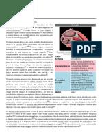 Coração.pdf