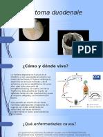Ancylostoma duodenale.pptx