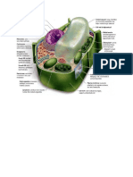 Cell Organelles & Functions