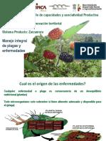 Los Reyes zarzamora.pdf