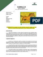 Ficha CABALLOS _equus caballus_.pdf