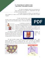 4 - Fisiología y Fisiopatología de La Glándula Tiroides