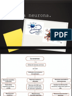 Neuronas y Glias