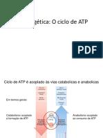 Aula 03 Ciclo de ATP