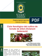 Exposion Producion Fenologia Tomate Arbol