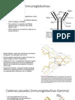 Inmunoglobulinas Fin