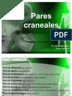 Investigación - Pares craneales