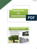 PINOPHYTAS ou GIMNOSPERMAS