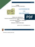 Práctica de definición de la estructura de una organización real (3).docx