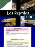 6 Teorico Reptiles