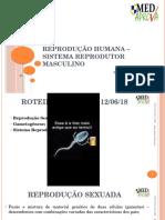 4 Reprodução Humana - Sistema Reprodutor Masculino