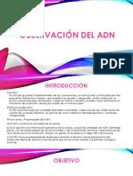 OBSERVACIÓN-DEL-ADN.pptx