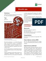 Brucella spp.pdf