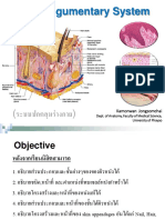 The Integumentary System of Basic Anatomy 2018