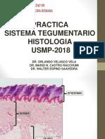 USMP PRACTICA - HISTOLOGIA 2018 - TEGUMENTARIO (2).ppt