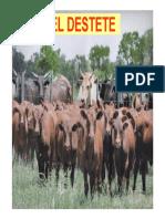 MANEJO DE TERNEROS.pdf