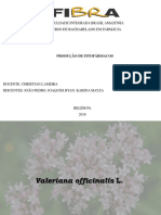 Valeriana Officinalis L-1