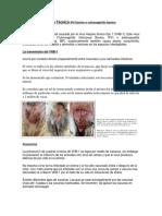 Ficha Técnica IPV bovino o vulvovaginitis bovino