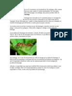 Procedimiento picadura Hormiga