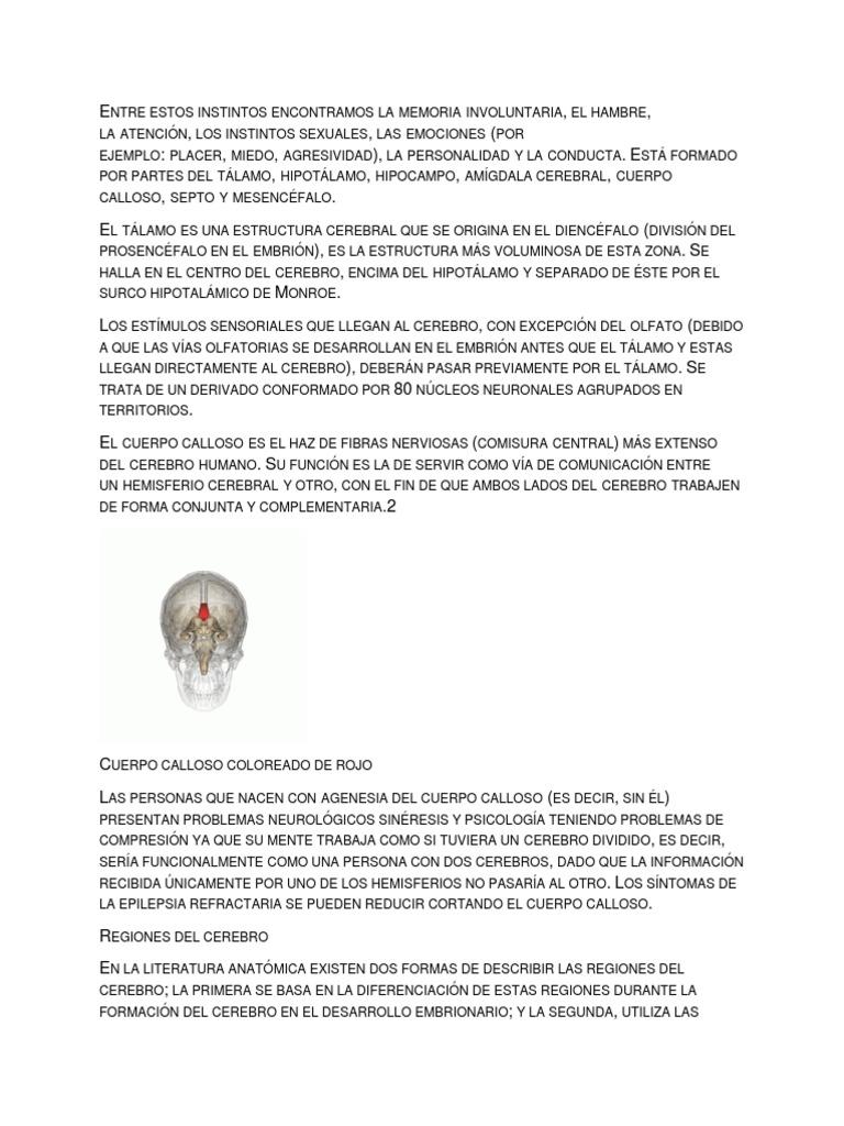 Tree Sistema Nervioso Central Ciencias De La Tierra Y De