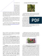 Folleto Presentación Los Esquimos (Formato Impresión)