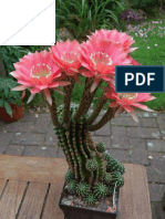 Amazingly beautiful Cactus Flowers.pdf